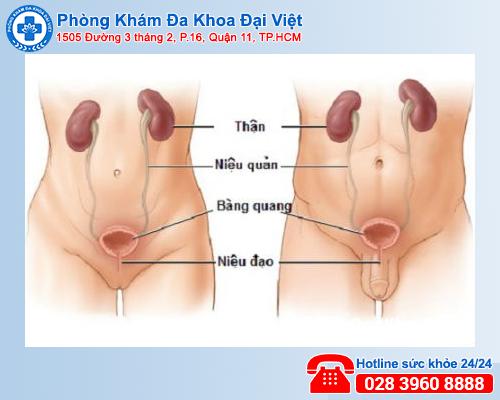Nguyên nhân - biểu hiện của các bệnh xã hội thường gặp - Phòng Khám Đại Việt